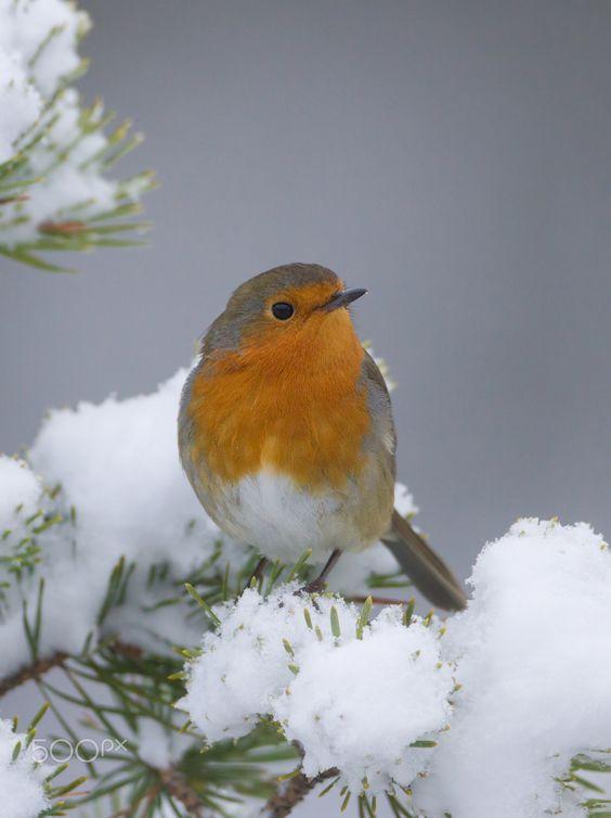 birds-in-the-snow-