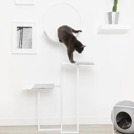 cat-space-