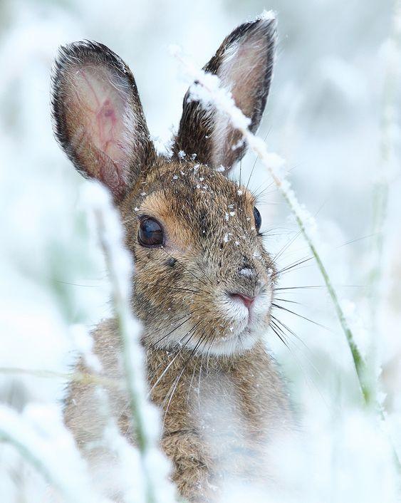 rabbit-in-the-winterland-