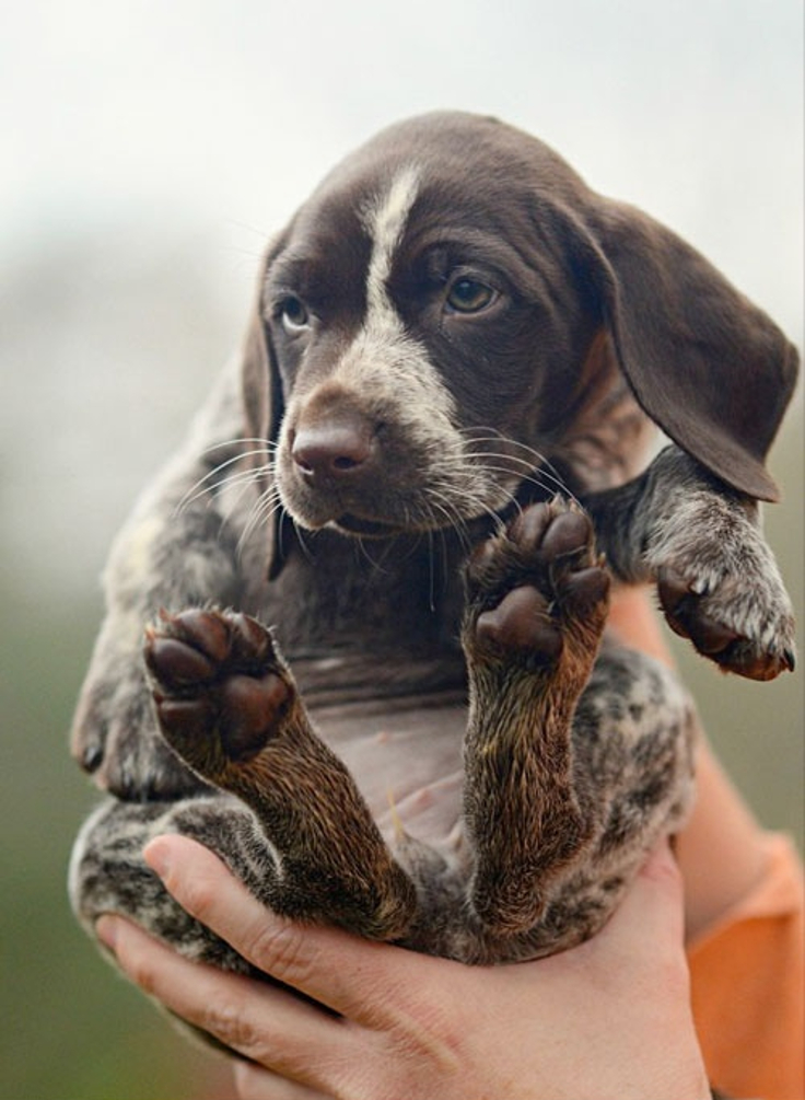 Top 10 America's Cutest Pets | Top Inspired