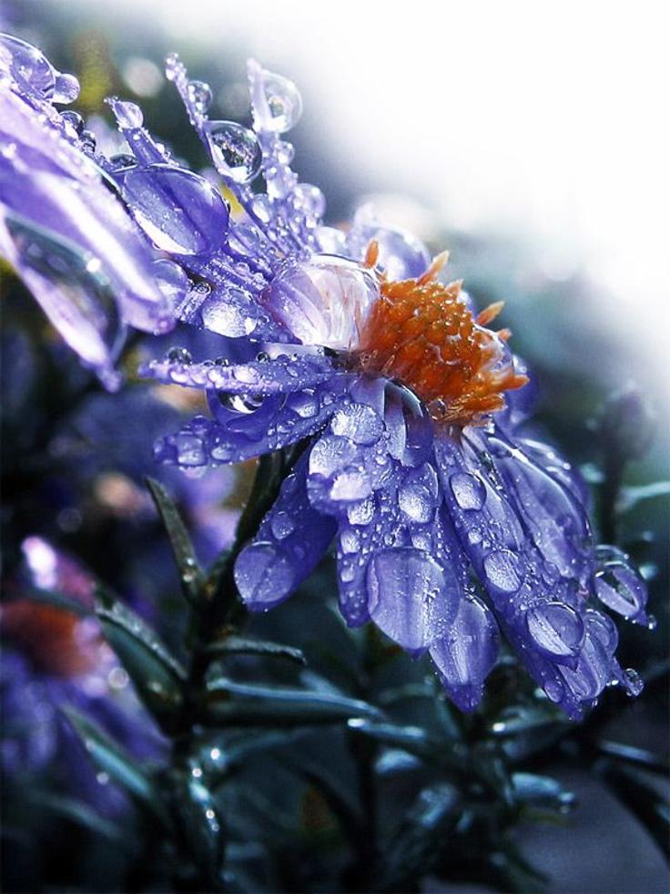 Blue-Rain