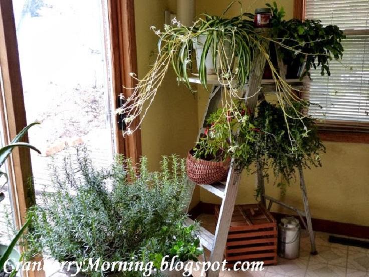 DIY-Plant-Ladder