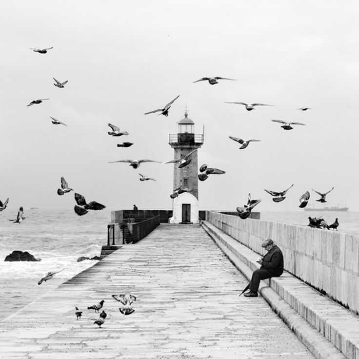Hichok-and-His-Birds