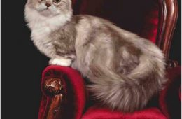 Top 10 Rare Cat Breeds | Top Inspired