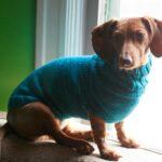 Pet-Sweater-150x150
