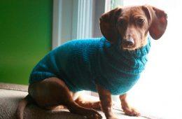 Top 10 DIY Creative Pet Accessories   Top Inspired