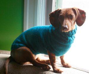 Top 10 DIY Creative Pet Accessories