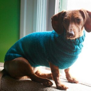 Pet-Sweater-300x300