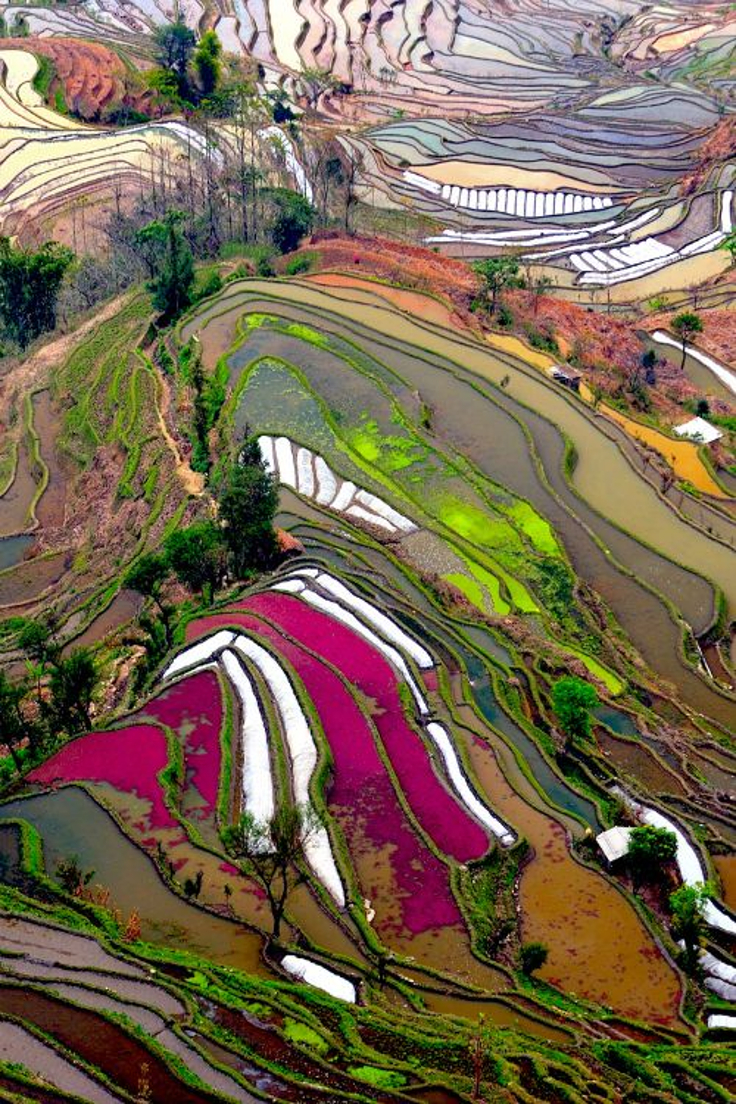 Rice-Fields