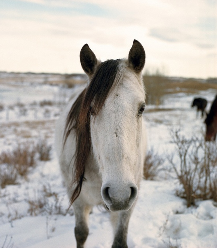White-Horse-In-The-Snow_05
