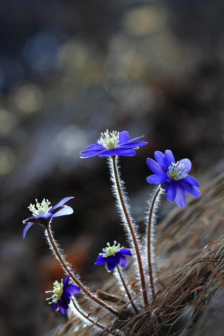 top 10 wonderful flower photos top inspired