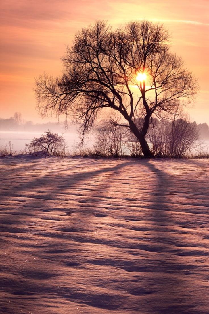 Winter-Sun_09