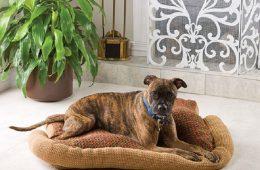 Top 10 Easy DIY Pet Bed Ideas | Top Inspired