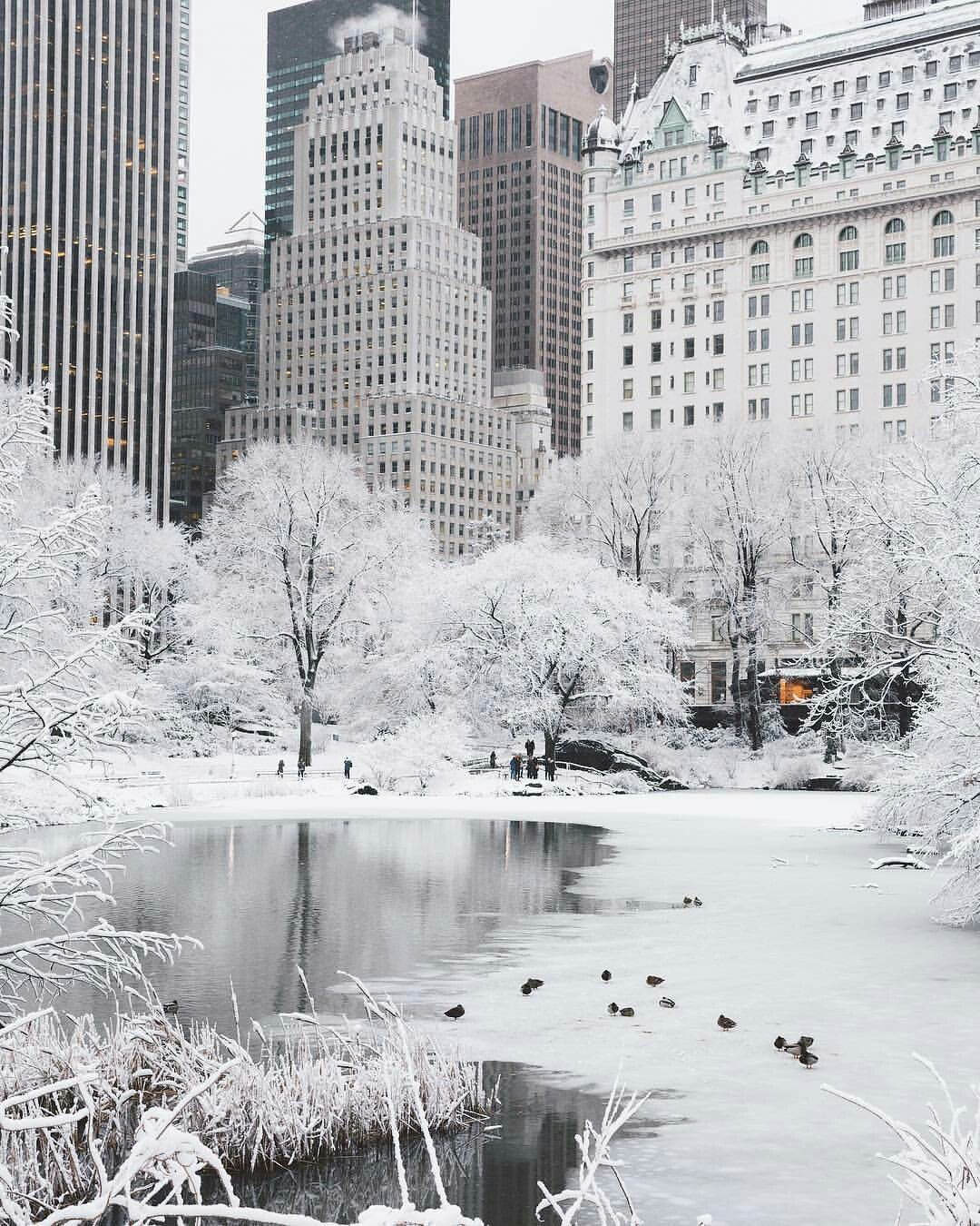 central-park-in-snow