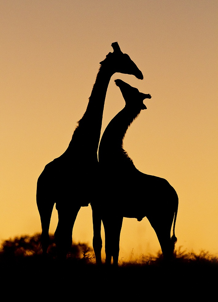 The gallery for --> African Animal Silhouette Photography