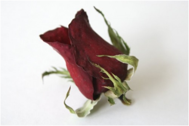 Drying-Roses-With-Silica-Gel