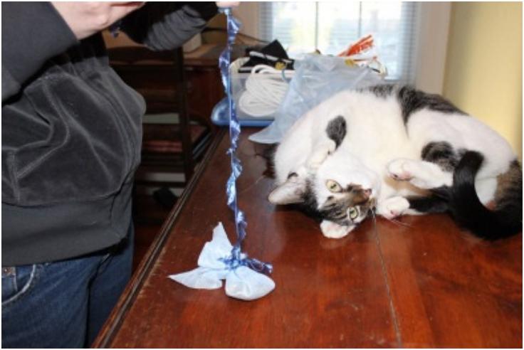 Easy-DIY-Catnip-Filled-Cat-Toy