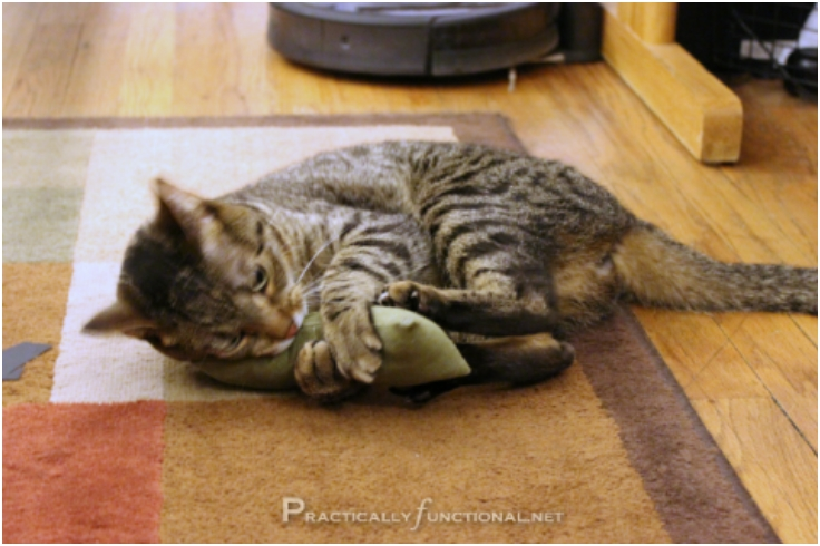 Top 10 Hilariously Fun DIY Catnip Toys