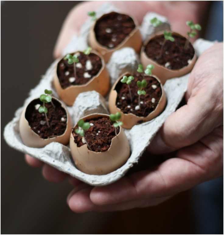 Plant-Seeds-Using-Eggshells