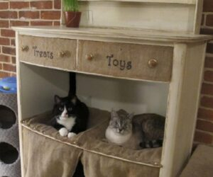 Top 10 Ways to Repurpose Old Furniture for Your Pet