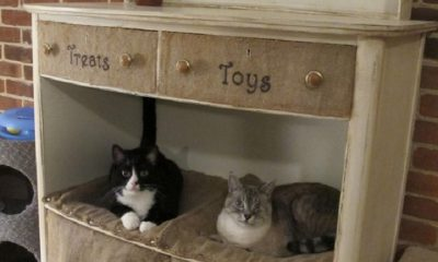 Top 10 Ways to Repurpose Old Furniture for Your Pet | Top Inspired