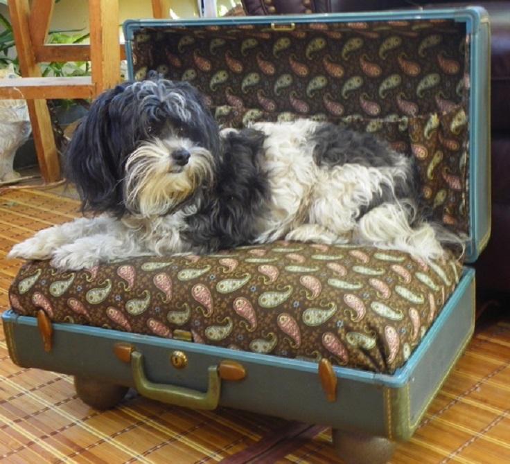 Vintage-Suite-Case-Turned-Pet-Bed
