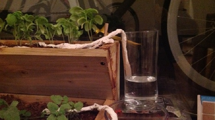 Keep-your-plants-from-dying-when-you're-away-with-this-paper-towel-trick
