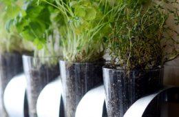 Top 10 DIY Clever Gardening Tricks | Top Inspired