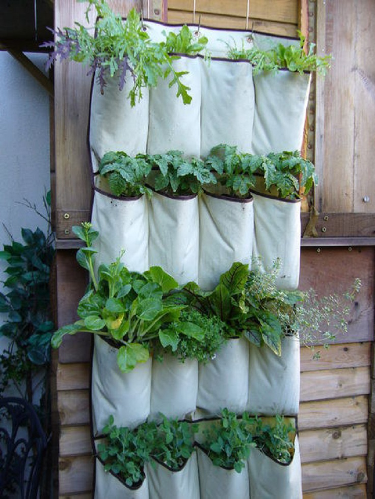 Make-your-own-vertical-herb-garden-out-of-a-shoe-rack.
