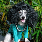 Top 10 Hilarious Dog With Wigs  | Top Inspired