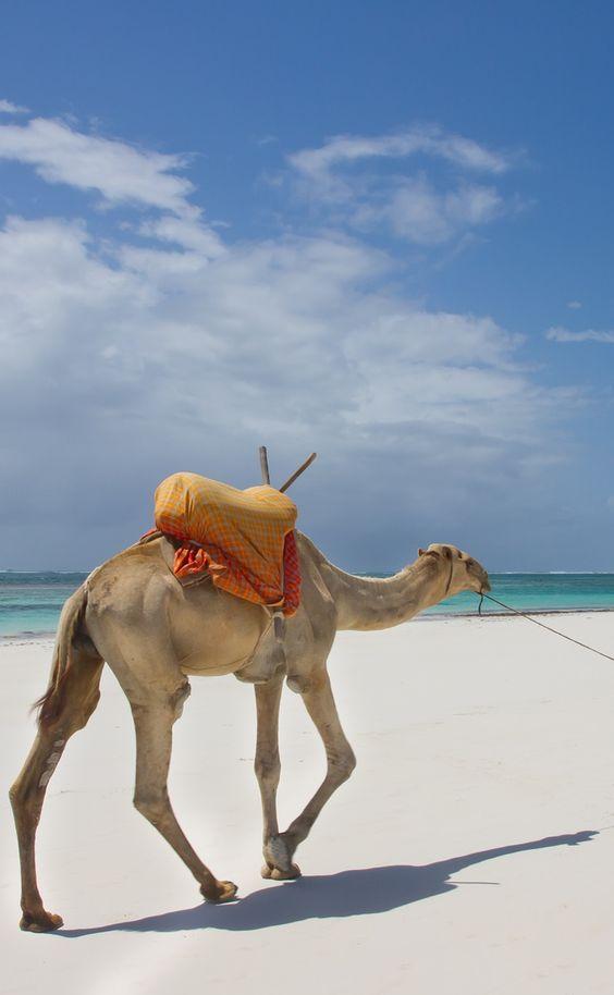 camels-at-the-beach-in-kenya-