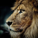 Top 10 Most Interesting Facts About Africa's Wildlife | Top Inspired