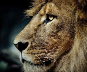Top 10 Most Interesting Facts About Africa's Wildlife