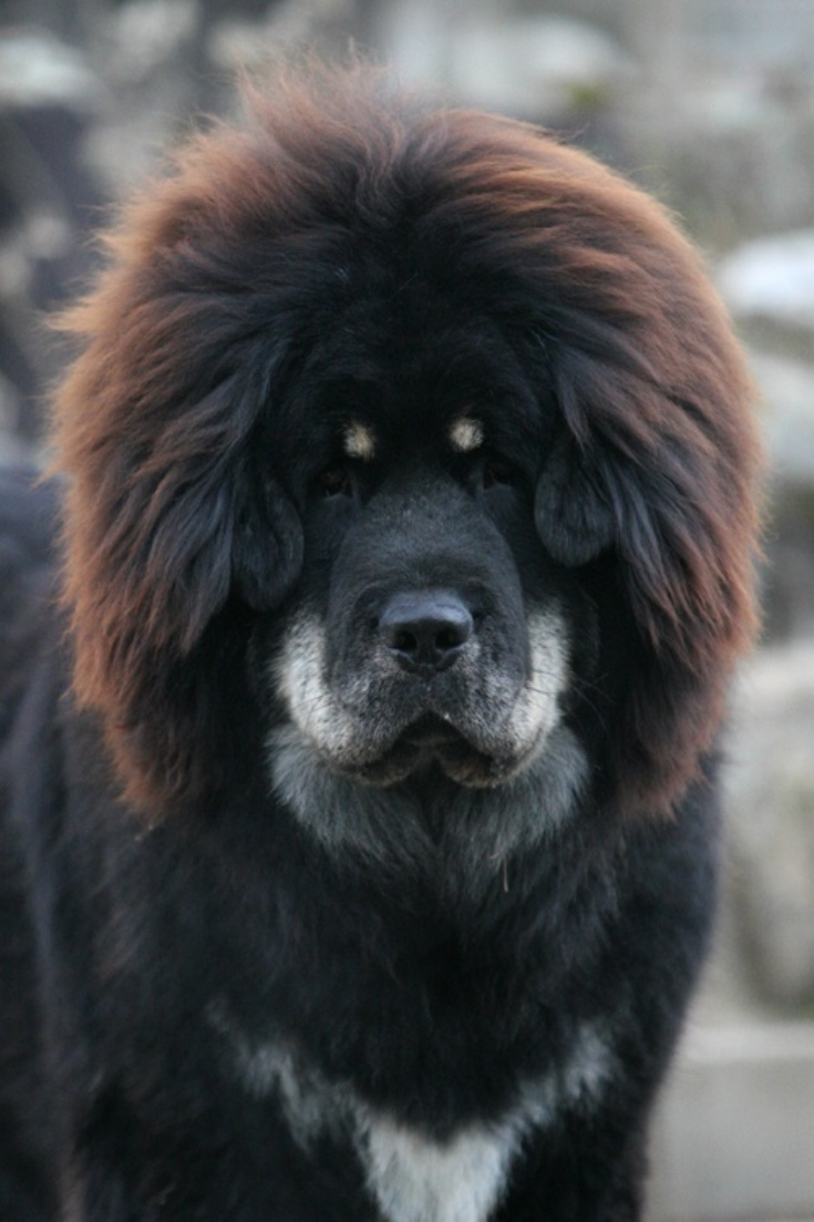 The top 10 most expensive pets - Dogtime |Worlds Most Expensive Cane