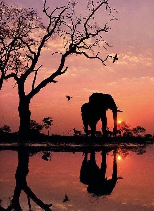sunset-in-the-wild-in-kenya-