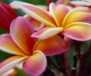 Top 10 Prettiest Flowers For Your Garden or Balcony