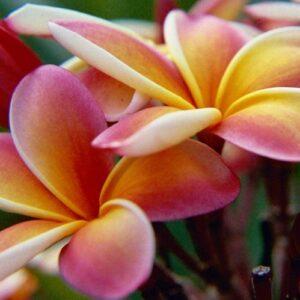 Top 10 Prettiest Flowers For Your Garden or Balcony | Top Inspired