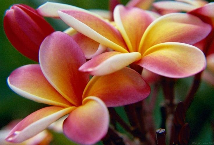 Top 10 Prettiest Flowers For Your Garden Or Balcony Top