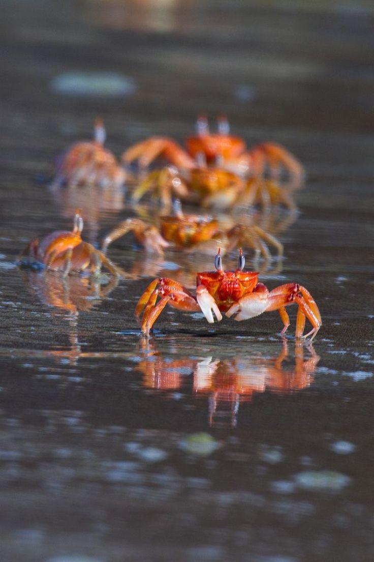 Crabs-Island-Australia