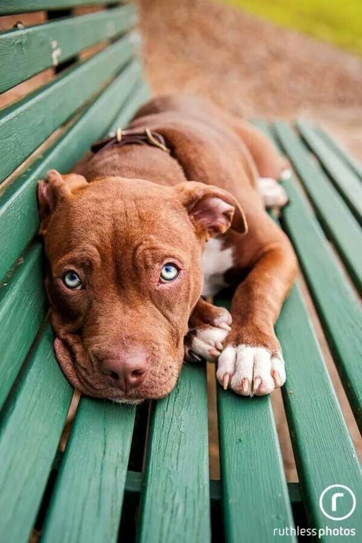 Top 10 Best Dog Breeds For A Home With Children Top Inspired