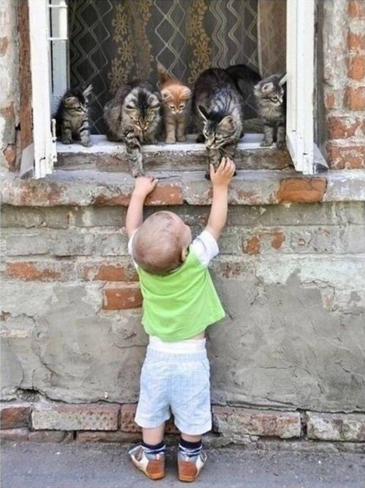 goodbye-my-cats