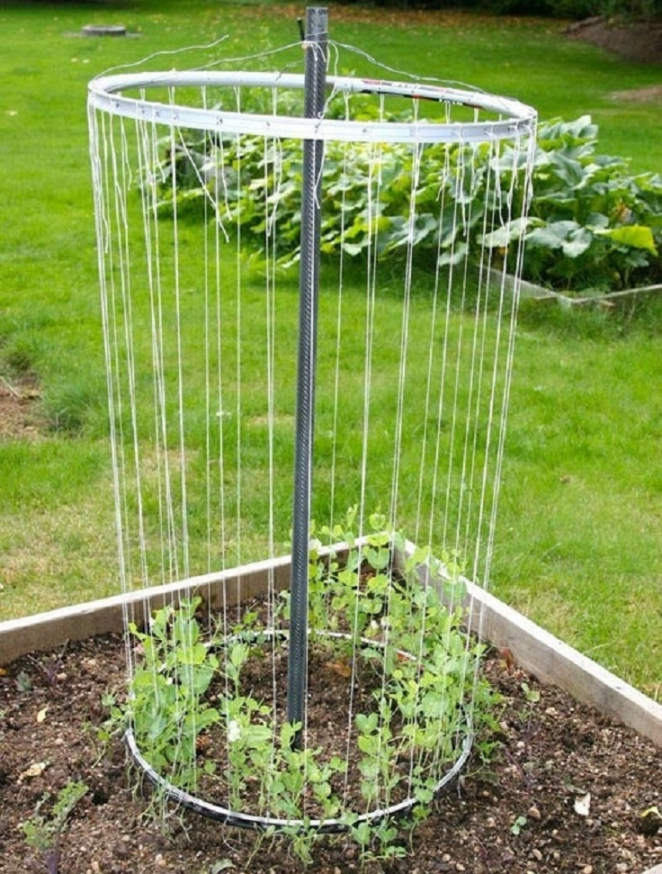pea-trellis-from-old-bike-wheel