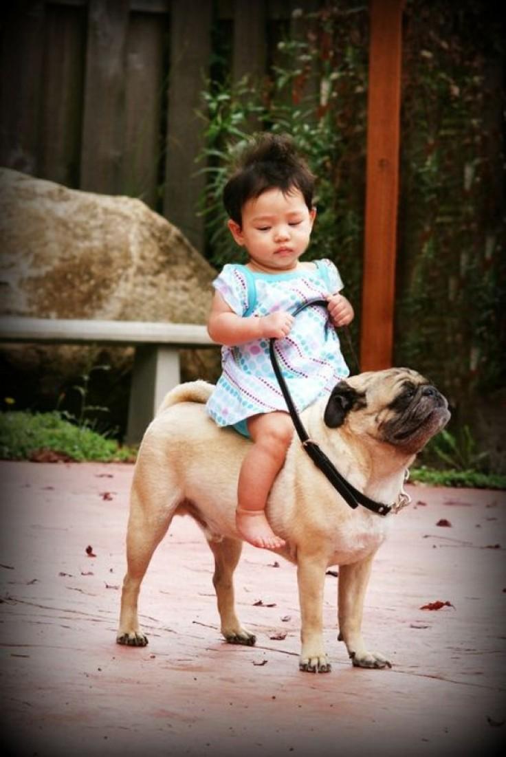 riding-a-pugg