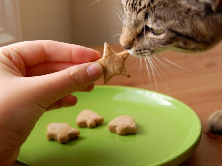 Homemade-Treat-for-Cats