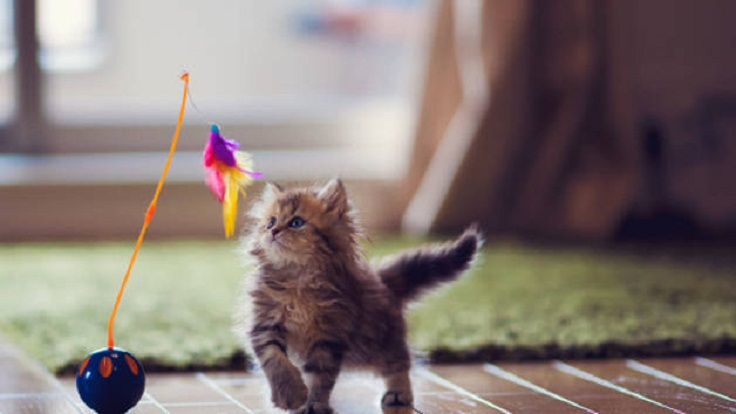 ball-cat