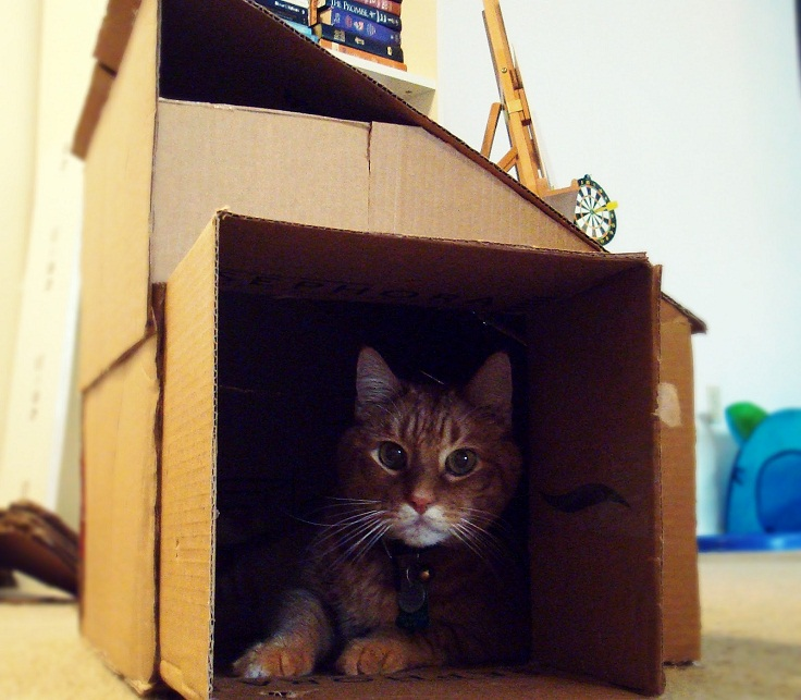 Top 10 DIY Toys and Accessories for Your Cat