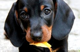 TOP 10 Most Popular Dog Breeds In USA For 2014 | Top Inspired