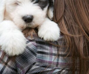 Top 10 Best Family Dogs for Kids