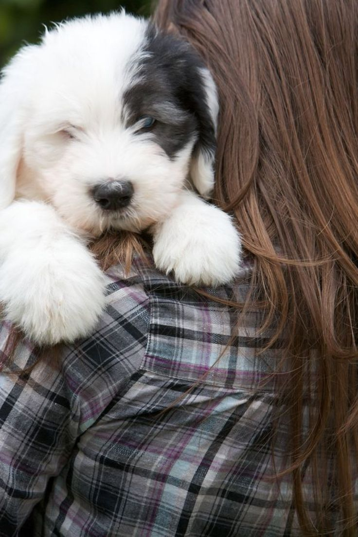 TOP 10 Best Dog Breeds For A Family With Kids | Top Inspired