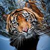 Top 10 Photos of Big Cats | Top Inspired